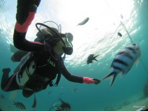お魚いっぱい 体験ダイビング