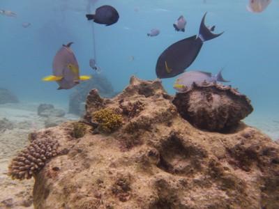 お魚いっぱい体験ダイビング3