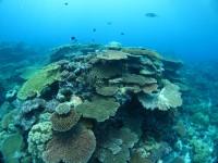 サンゴ礁の保護