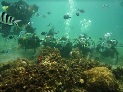 沖縄修学旅行体験ダイビング2