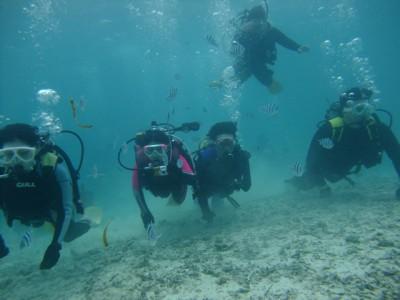 修学旅行体験ダイビング3