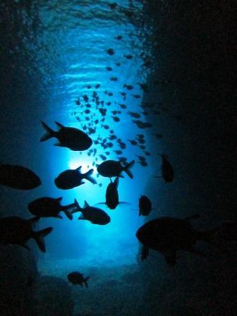 沖縄|青の洞窟|ブルーリーフ