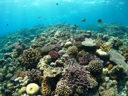 水納島ダイビング|ブルーリーフ