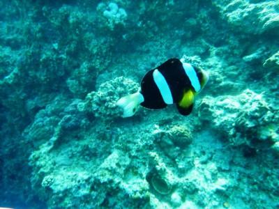 沖縄体験ダイビング10