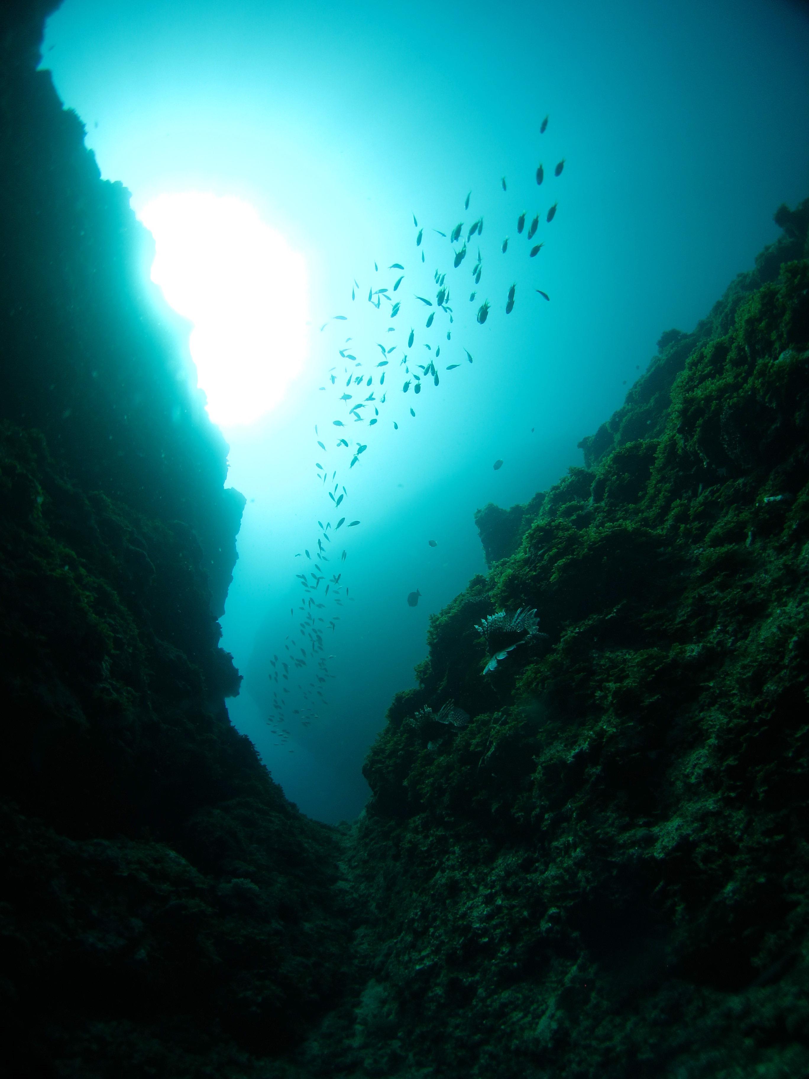 地形ダイビング|ブルーリーフ