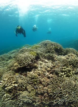 サンゴポイント|ブルーリーフ