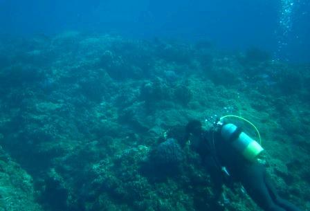 慶良間サンゴ礁保全|ブルーリーフ