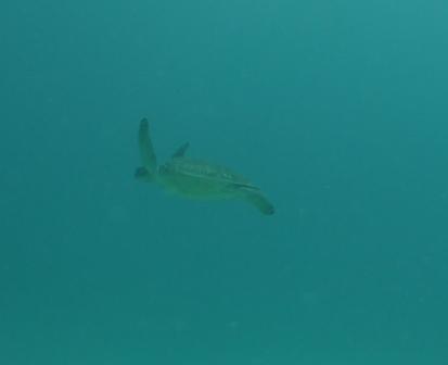 水納島 FUNダイビング