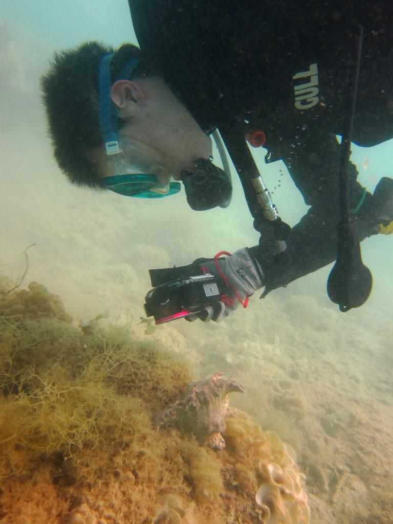 水中デジカメ写真 ブルーリーフ