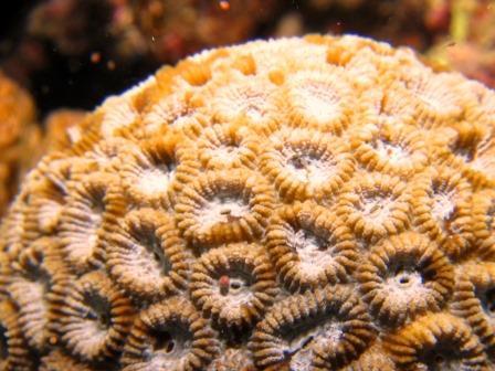 恩納村サンゴの産卵|ブルーリーフ