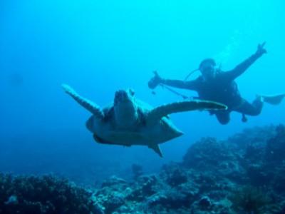 カメと泳ぐ 沖縄r