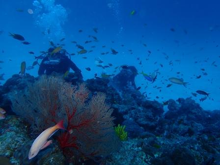 水納島遠征ダイビング