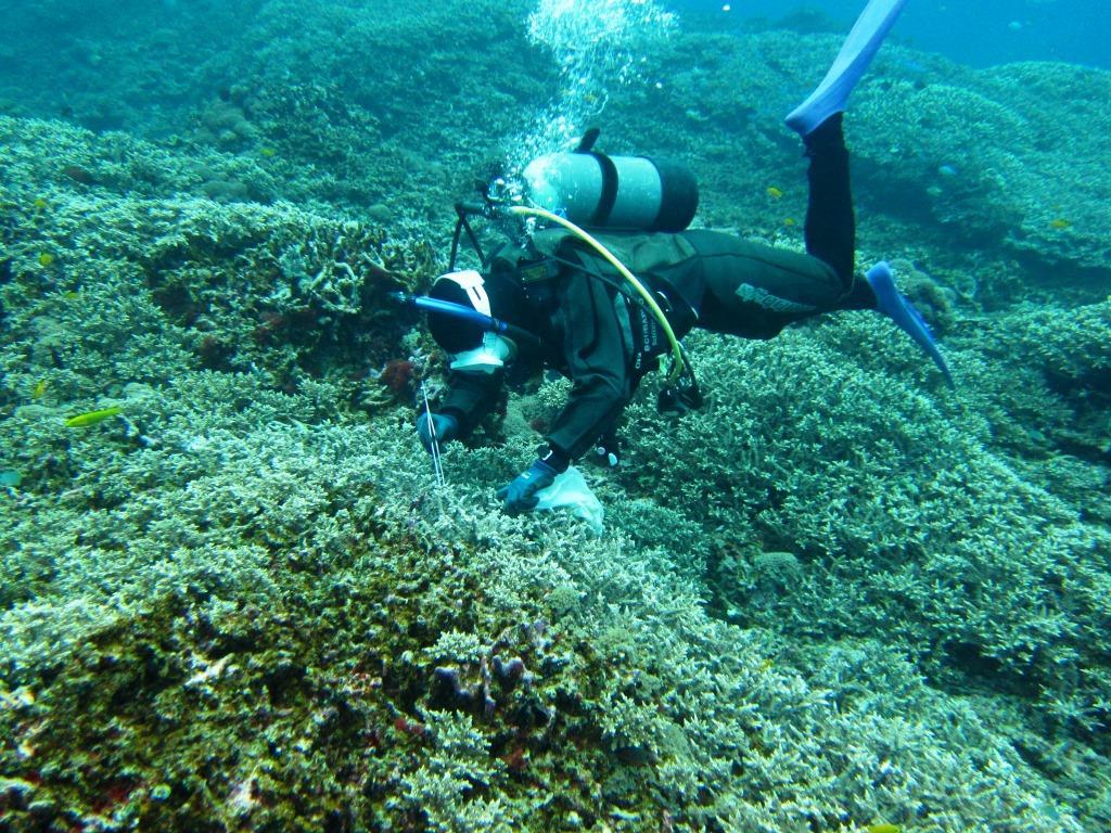 慶良間サンゴ保全活動|ブルーリーフ