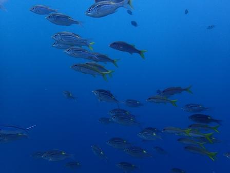 沖縄北部遠征ダイビング
