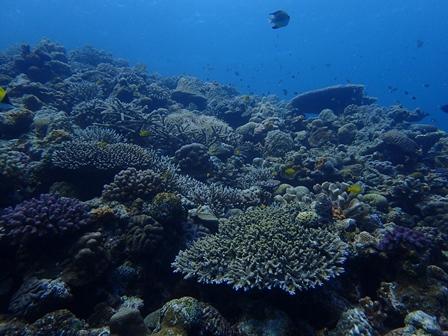 水納島サンゴ
