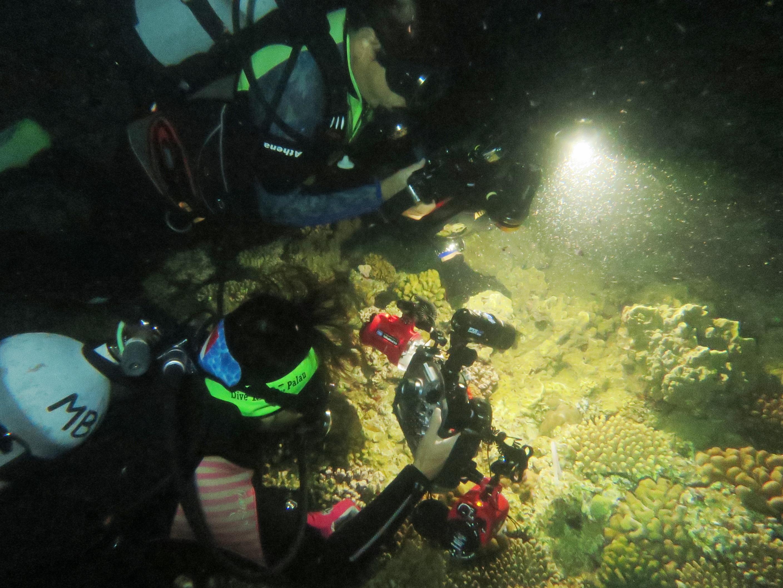 沖縄|恩納村サンゴ産卵|ブルーリーフ