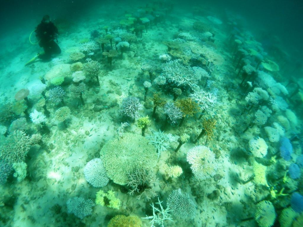 サンゴ白化|恩納村|2016