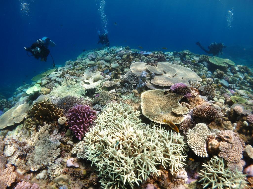 水納島サンゴ白化