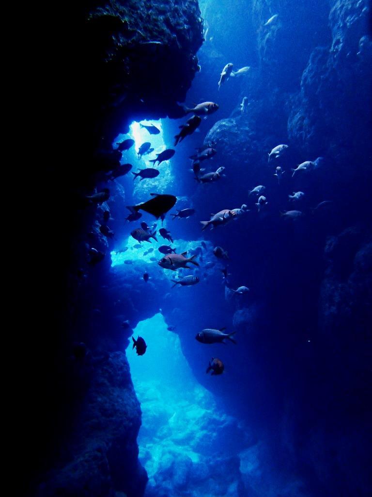 瀬底島ラビリンス